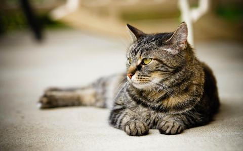 Szybkie i skuteczne odczulanie alergii na sierść kota